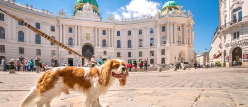 Städtereise mit Hund