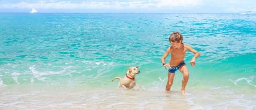 Special: Baden mit Hund