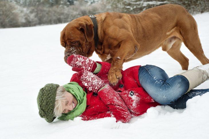 Winterurlaub mit Hund im Schnee