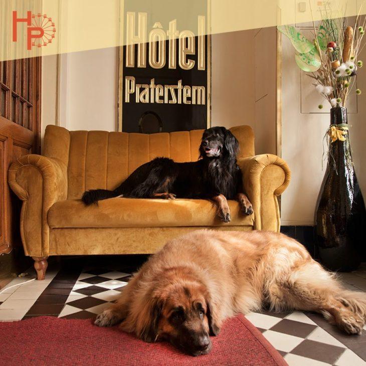 Urlaub Mit Hund Eingezäunter Garten: Urlaub Mit Hund Leopoldstadt
