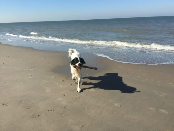 Strandferien mit Hund