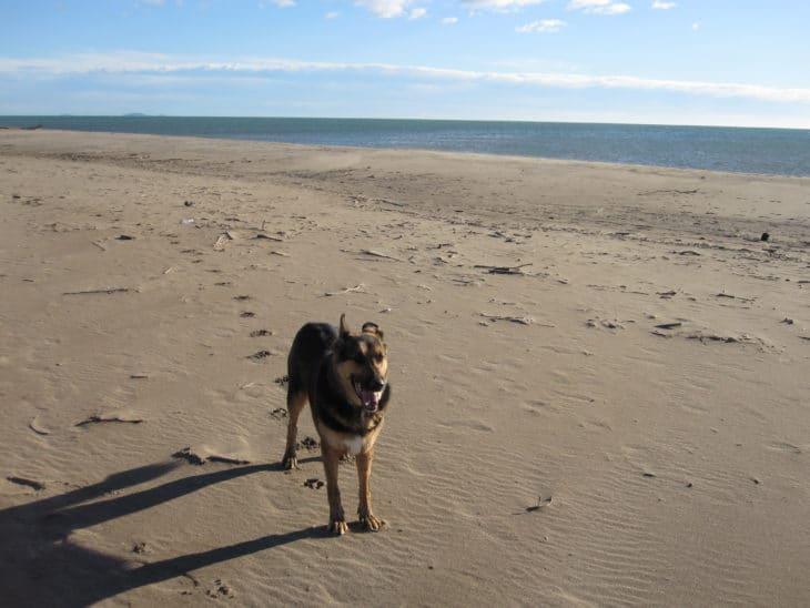 Hundeparadies Le Mas de Perimont