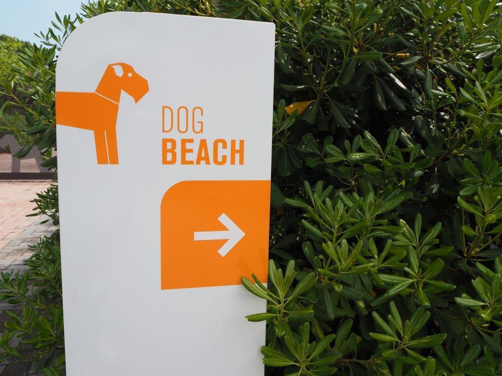 Dog Camp Mit Hunde Pool Und Beach