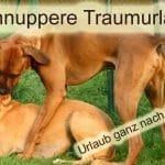 Hundeparadies Eifel