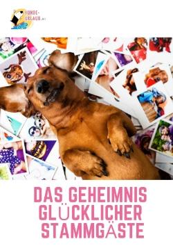 Ratgeber: Das Geheimnis glücklicher Hunde-Urlauber