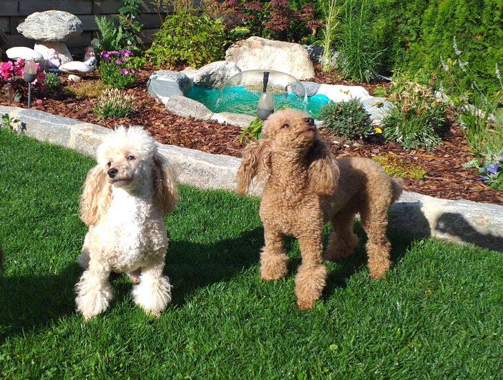 Haus Bionda. Gastgeber, die Hunde lieben!!