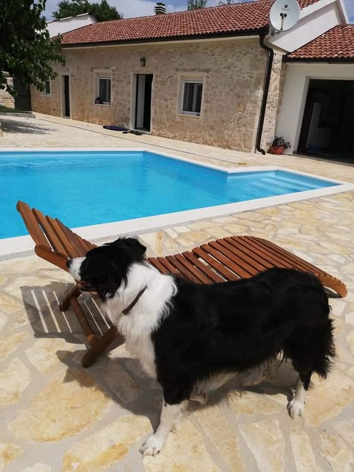 Ferienhäuser mit Hund bei Kornati-Insider