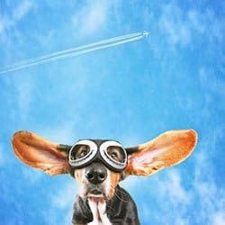 dogfit-flugzeug
